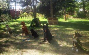 psy zajęcia z posłuszeństwa